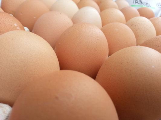 Eier frisch gelegt