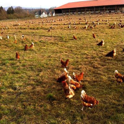 Jede Menge Platz in den Weiden rum um die Stallungen