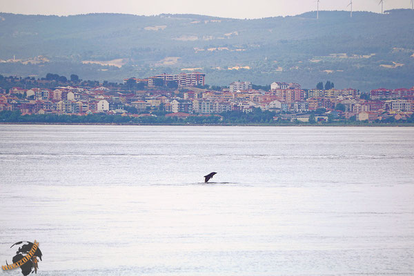Delphine begleiten uns auf dem Weg von Europa nach Asien.