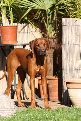 04.11.11 - Thandu mit 7½ Monaten