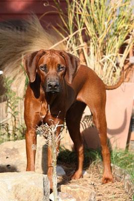 21.10.11 - Thandu mit 7 Monaten