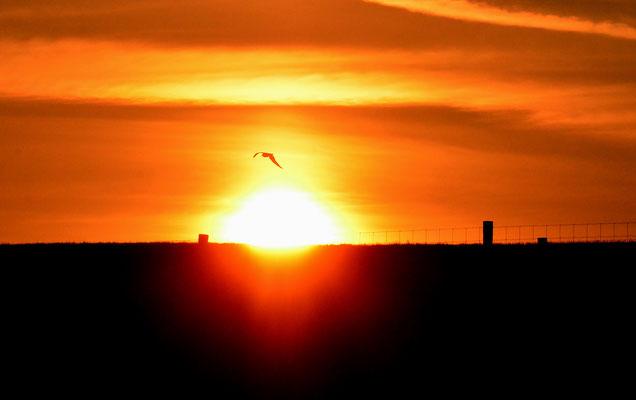 Sonnenaufgang hinterm Deich