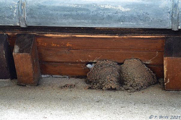 Reges Leben im Nest