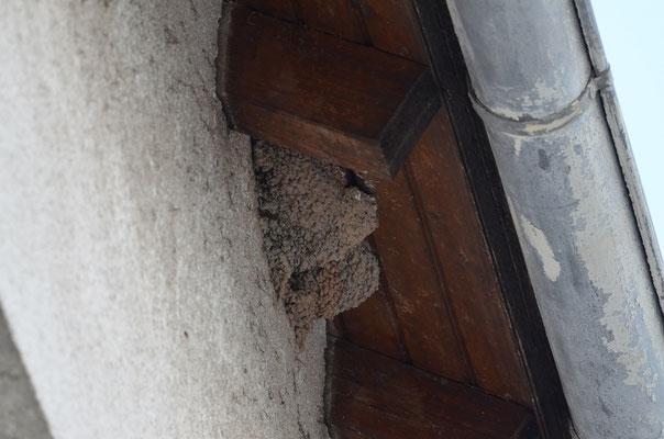 5 Nester am Haus