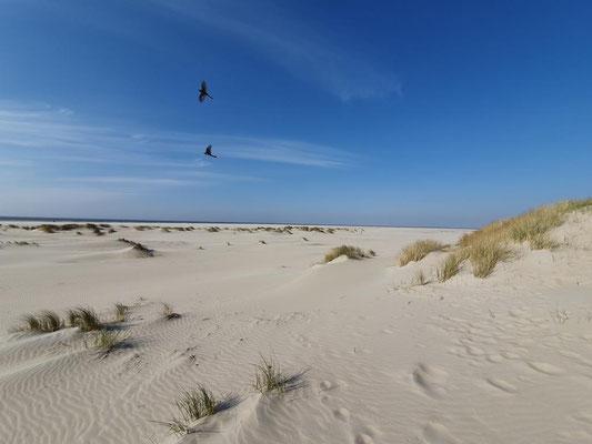 In den Dünen von Texel