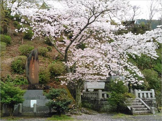 記念碑元帥古賀峯一大将と桜の写真