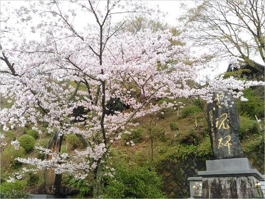 記念碑忠魂碑と桜の写真