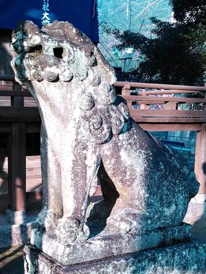 與止日女神社拝殿前の狛犬阿形の写真