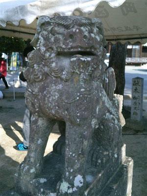 宮地嶽神社境内の狛犬阿形の写真