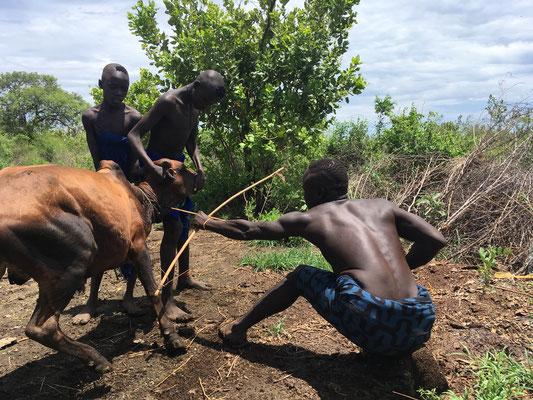 Пастухи племени Мурси пьют кровь коров