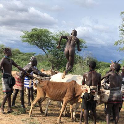 церемония Bull Jumping в племени Хамер. Проводятся,  в основном, в сентябре-октябре