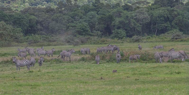 Keine Safari und trotzdem Zebras und andere Tiere.