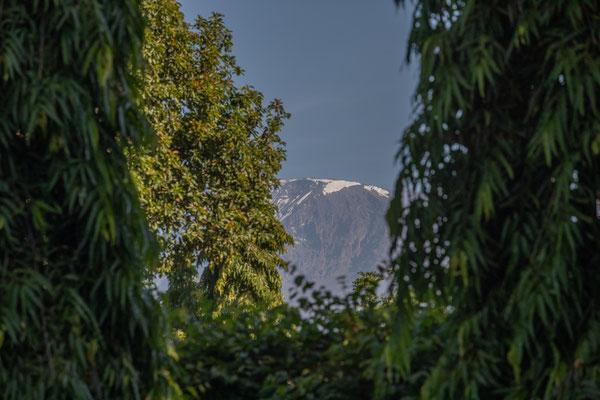 Ein erster Blick auf den Kilimandscharo vom Hotelgarten aus.