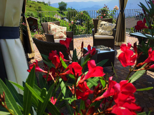 Splendida vista e profumo di rododendro rosso.