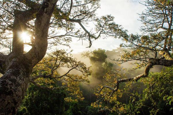 Canopy -- Peru / Centro De Rescate Taricaya