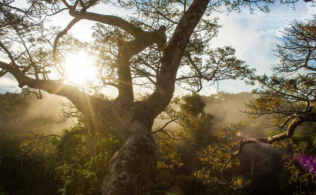Rainforest -- Peru / Centro De Rescate Taricaya
