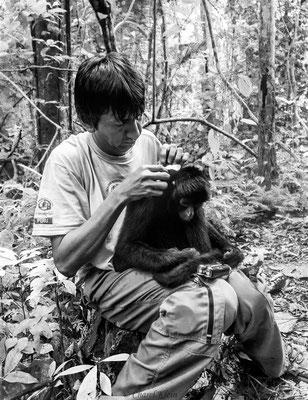 nurse a spider Monkey  -- Peru / Centro De Rescate Taricaya