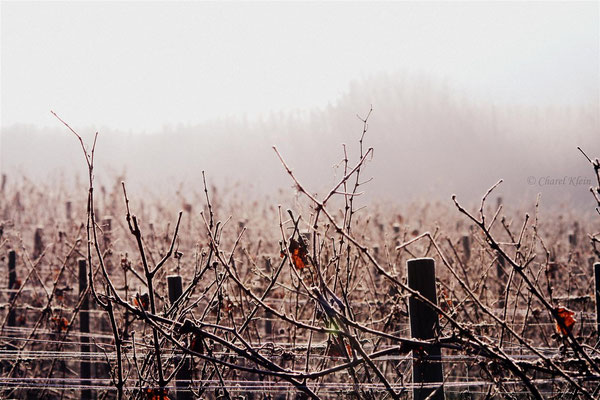 Winter in Vineyards - Wellenstein