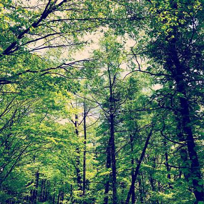 那須の森の中のスタジオです