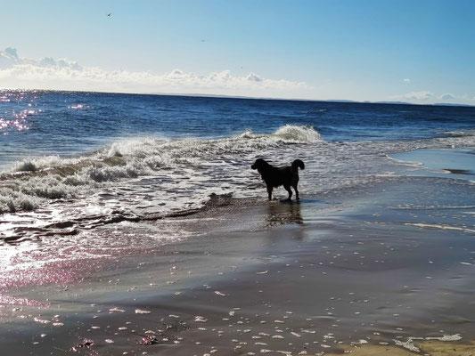 Emy v. Wellerhof im Urlaub an der See