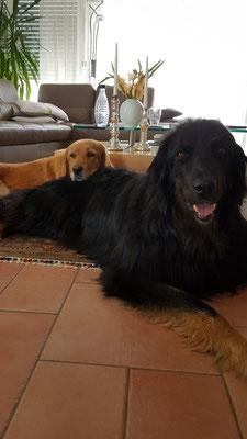 Banja (hinten) mit Bruder Asco