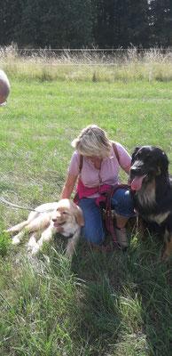 Hunter hat seinen Halbbruder Gringo in der Hundeschule kennen gelernt