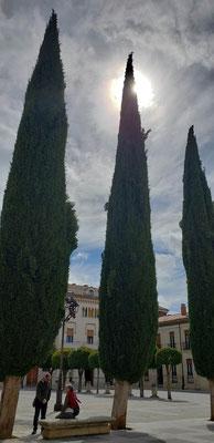 ゴッホの絵で有名な糸杉は、「天に届く」ので墓所に植えられることが多いそうです。
