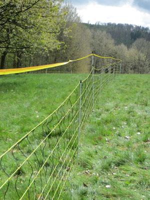 Die Breitbandlitze erhöht den Zaun. Foto: Wolfgang Weber