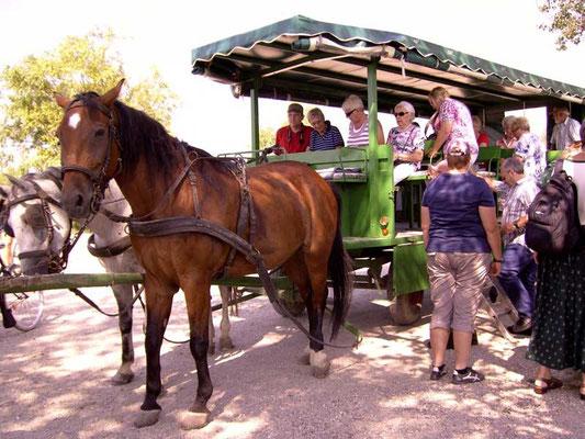 Mit dem Kutschwagen ging es durch das Burgenland