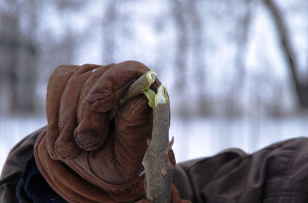 Keine ungewöhnlichen Frostschäden bei -25°C