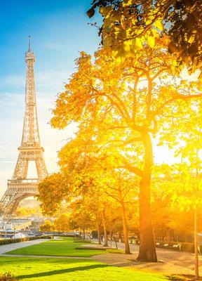 Blauglockenbaum in Paris