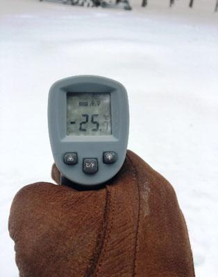 Paulownia Shantong und Tomentosa bei -25°C