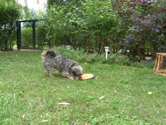 Im Garten kann ich toll spielen - auch mit der neuen Scheibe!