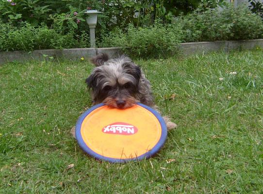 So sieht ein Frisbee aus - und ich geb das Ding nicht mehr her!