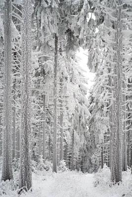 Winter auf dem kleinen Feldberg mit Raureif an den Bäumen