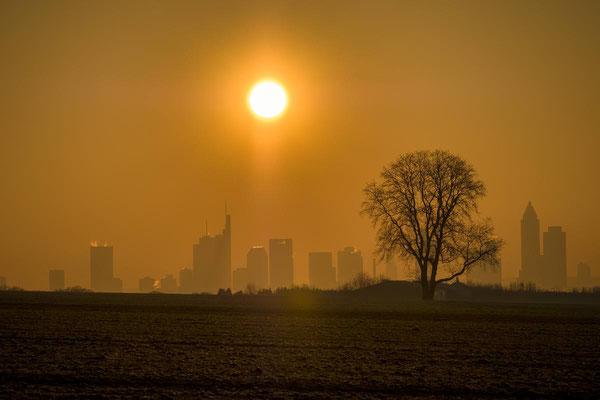 Skyline von Frankfurt mit Walnussbaum und aufgehender Sonne