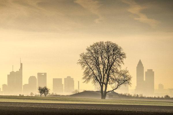 Die Skyline von Frankfurt und Walnussbaum als Silhouette zur goldenen Stunde vor Sonnenaufgang