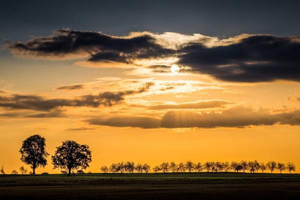 Sonnenaufgang hinter Wolken mit Walnussbaum und Allee als Silhouette