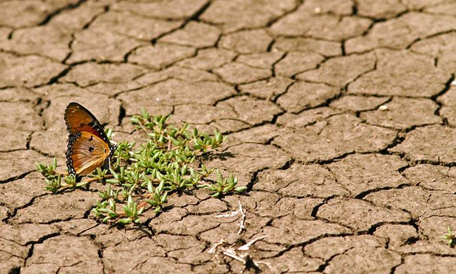 Fotoquelle: www.rubikon.news