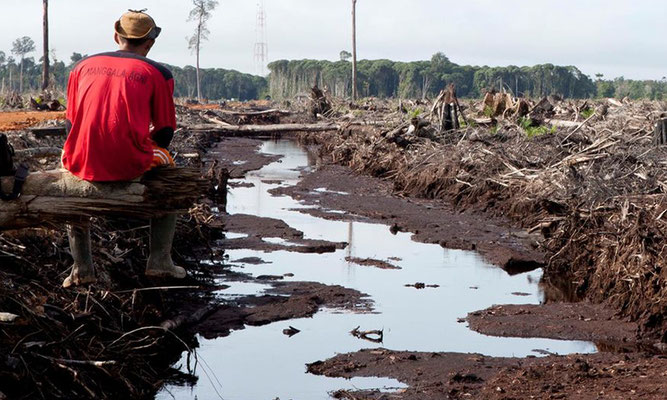 Fotoquelle: www.regenwald.org | Alejo Sabugo | IAR Indonesia