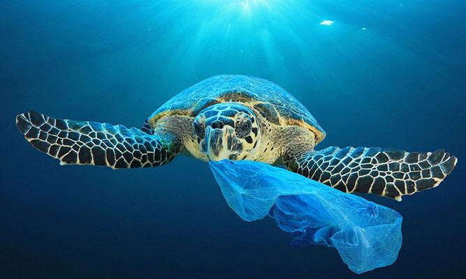 Fotoquelle: www.marineconservation.org