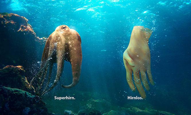 Fotoquelle: Ocean Care