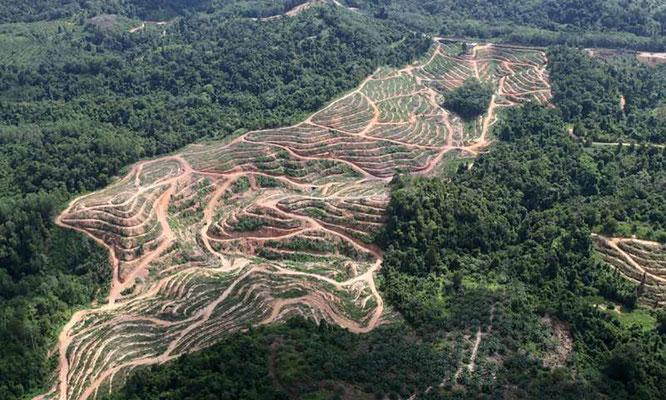 Fotoquelle: www.phys.org