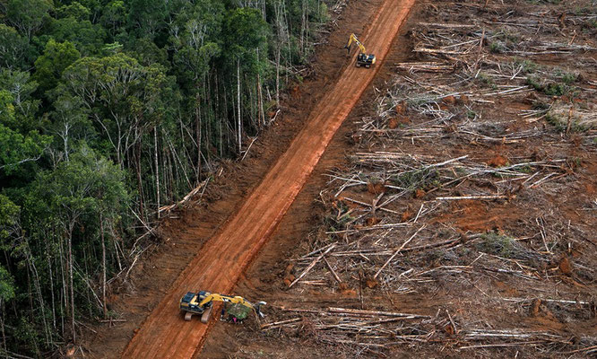 Foto: ℗ Ulet Ifansasti / Greenpeace