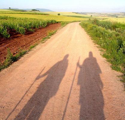 Weinregion Rioja, so ein Foto hat wohl jeder Pilger unterwegs geschossen