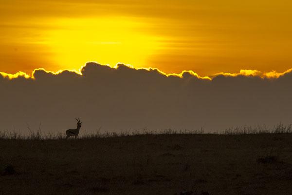 Sunrise in the Masai Mara, Kenya