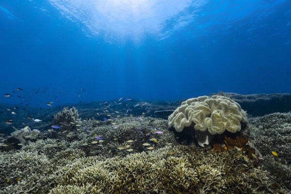 Living reef, Raja Ampat, Indonesia