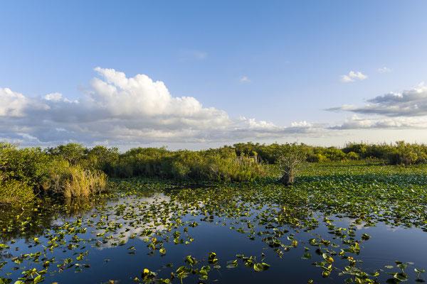 Everglades Nationalpark, Florida, USA