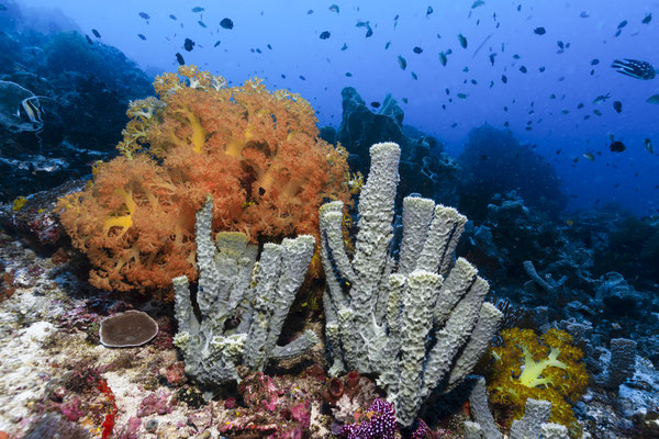 Living Reef, North Sulawesi, Indonesia