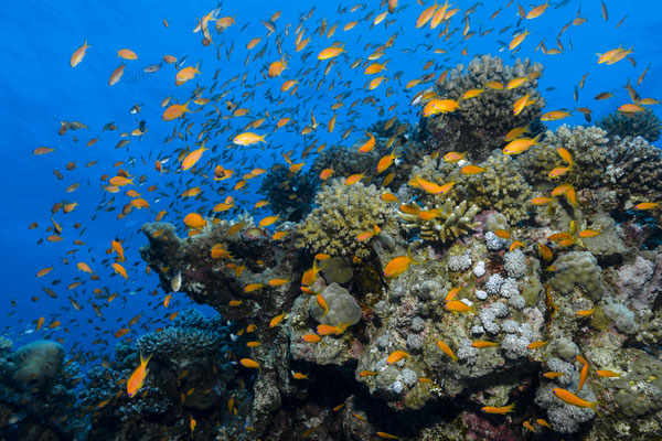 Living Reef, Red Sea, Egypt